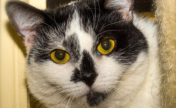 Pet Focus: Superstar of the Week - Panda