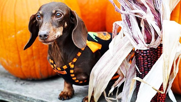 Halloween events pack calendar