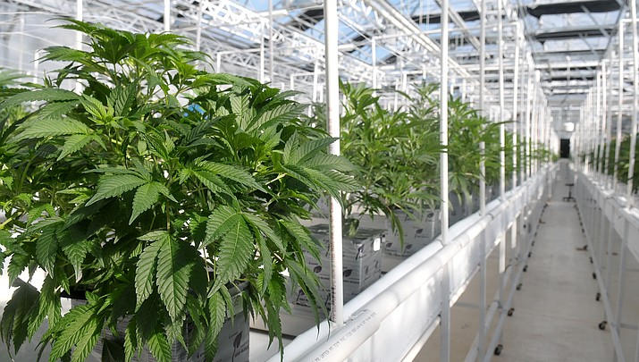 Town looks to recoup some of its marijuana costs