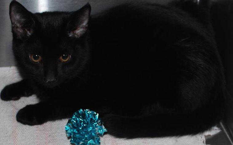 miss kitty cat house prescott az
