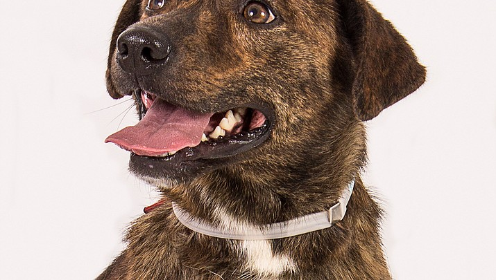 Pet Focus: Humane Society - Derrick