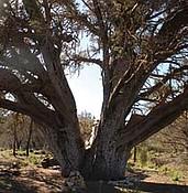 Hotshots memorial ideas centered around their tree photo