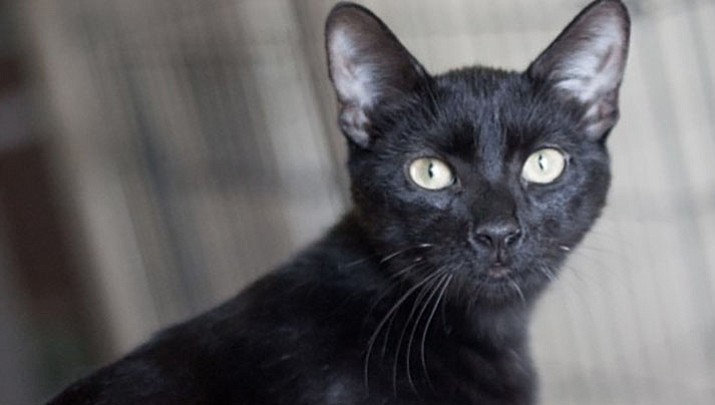 Pet Focus: Catty Shack Pet of the Week - Ava