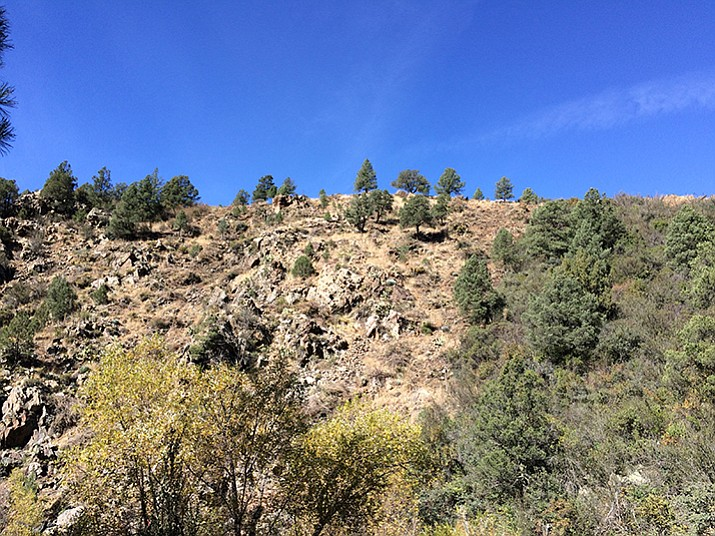 The firebreak on the southwestern edge of the Prescott Basin at the left will grow back to a drier, denser, more dangerous fire risk in about 15 years.