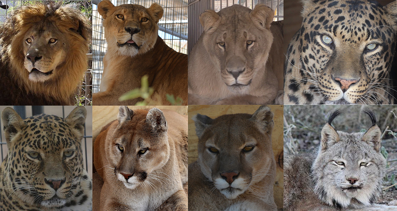 Keeper of the Wild gets outstanding charity rating, 8 new ...