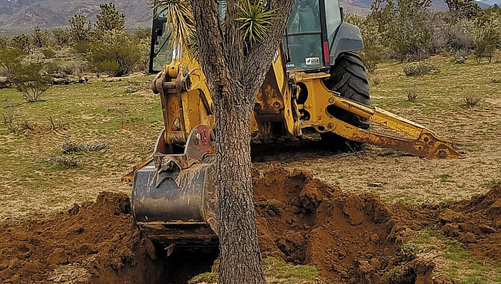 Many Joshua Trees were transplanted
