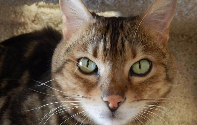 Pet Focus: Miss Kitty's - Marnie