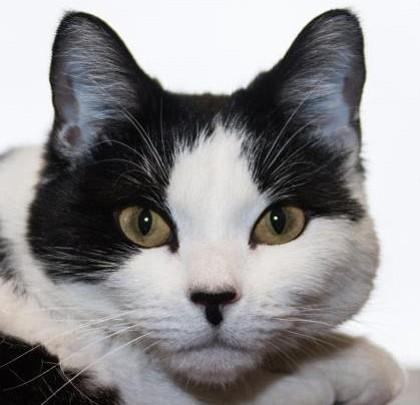 Pet Focus: Yavapai Humane Society - Tilly