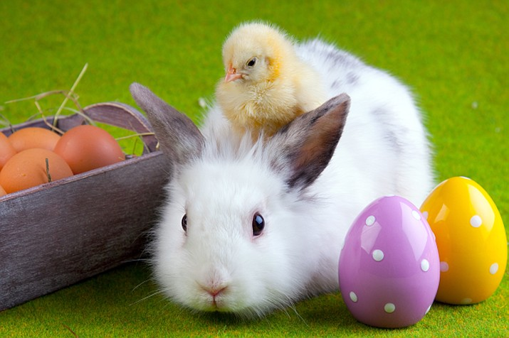 Easter is quite similar to other major holidays like Christmas and Halloween, which have evolved over the last 200 years or so. In all of these holidays, Christian and non-Christian (pagan) elements have continued to blend together. (Adobe Images)