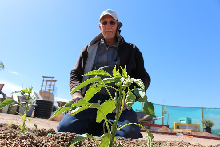 Don Swanz works on a garden plot at Dig It Community Garden for his friend, Teresa Faatz, who is growing beans and peppers at the garden. (Photo by Hubble Ray Smith/Daily Miner)