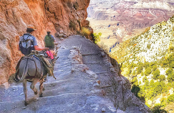 Grand Canyon Rangers descend the South Kaibab Trail with two burros Oct. 14. (Photo/Amber Wann)