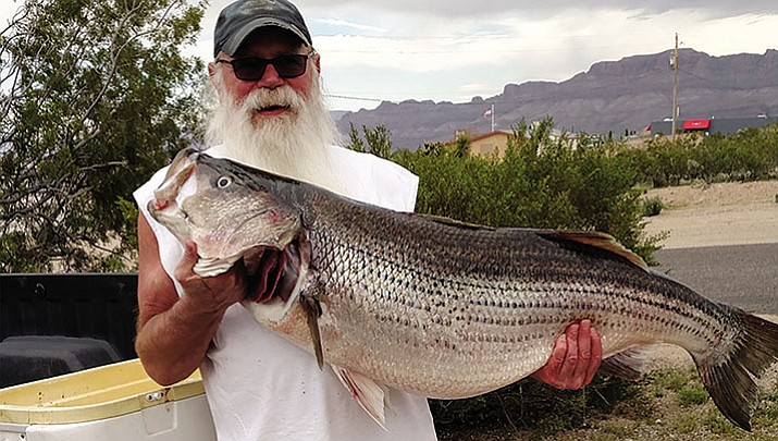 Ginkins catches a lunker on Lake Mead