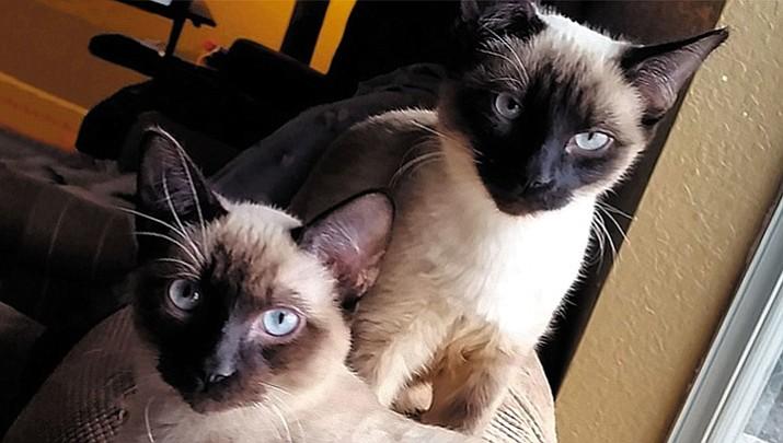 Cats: Pet or Menace?