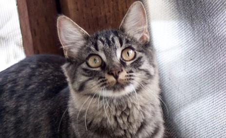 Pet Focus: Catty Shack — Aurora