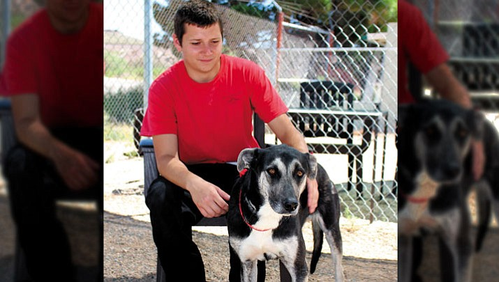 Doggone good deal: Western Arizona Humane Society's  'Most Wanted PAWS' program starts Monday