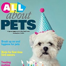 All About Pets photo