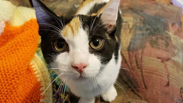 Pet Focus: Sassafras — Catty Shack