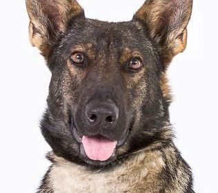 Pet Focus: Abby, YHS Adoptions Center