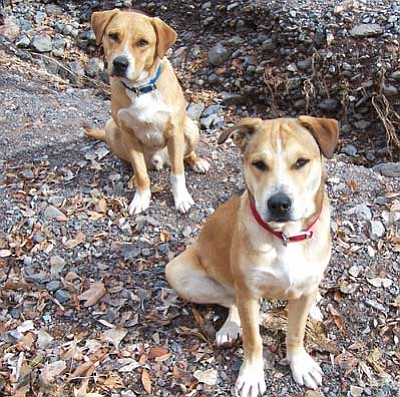 Courtesy Photo<br /><br /><!-- 1upcrlf2 -->Simple vaccinations can prevent serious distemper and parvo in pets.