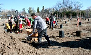 "Students, staff and alumni of the Orme School enjoyed the warm, sunny weather Saturday as they planted 126 of the 200 trees for the school's new ""Burpee Orchard."""
