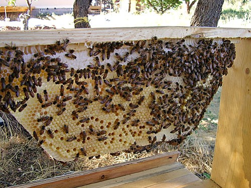 Non-traditional Bar-style bee hives are easy to build and simple to use according to Barry Lay. He has about six of these hives at his house that produce about 150 pounds of honey.