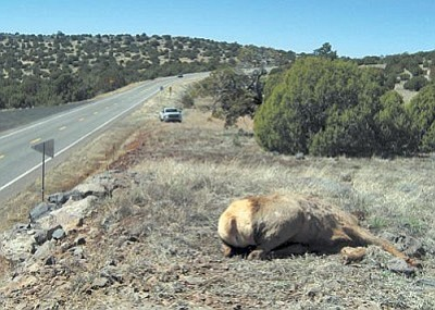 Arizona Game & Fish Department is seeking information about an elk poaching on State Route 260.