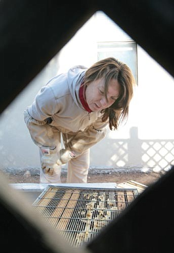 "VVN/Bill Helm<br> Before doing anything else, Lake Montezuma resident Bella Donna starts her day by checking on her bees. ""I make sure they have enough water,"" she says."