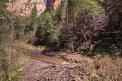 The Oak Creek Erosion Control Project is part of the new Northern Arizona Forest Fund. VVN/Ed Bustya