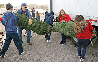 Each year, the Camp Verde Kiwanis Club sells Christmas trees in the Bashas' parking lot. (Photo by Bill Helm)