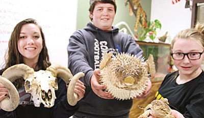 Each year, From left, Camp Verde High School students Cheyenne Reece, Michael Martin and Amanda Punkoney proudly show a few of the exhibits their class will have on display (Photos by Bill Helm)