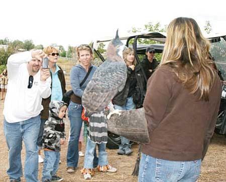 Ornate Hawk Eagle held by Pam Ostwinkle