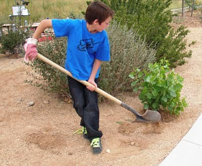 Courtesy photo<br>A Granville Elementary School student in Prescott Valley works in the school's native plant garden.