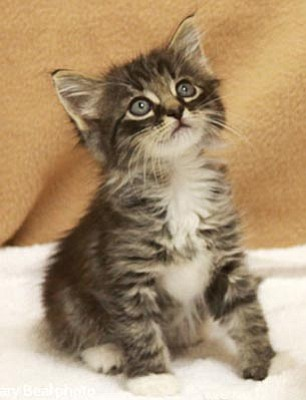 United Animal Friends is offering reduced adoption fees for cats and kittens on Feb. 11 and 12 in celebration of Kitty City's first anniversary in Petco.