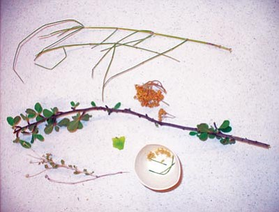 Courtesy photo<br>Above are samples of plants that can be used to make tea.
