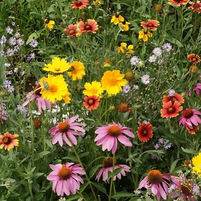 Courtesy photo<br>Wildflower seeds are best planted before March 1.