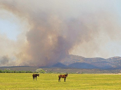 Eric Adam/Courtesy photo<br> Horses graze in Peeples Valley under a rising cloud of smoke from the Yarnell Hill Fire on June 30. The fire burst out of control later that day, killing 19 Granite Mountain Hotshot firefighters and devastating the town of Yarnell.