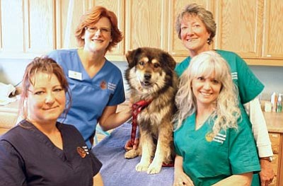 Courtesy photo<br>Dr. Redmon (back left) and her staff stand ready to provide quality spay/neuter and wellness services to your pet. Call 771-0547 to see if you qualify for free or low-cost YHS services.