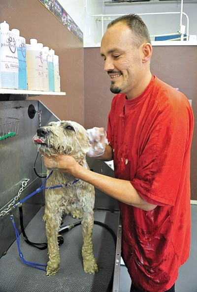 Matt Hinshaw/The Daily Courier <br> Al Gutierrez, owner of Al's Lucky Dog Grooming in Prescott, bathes a dog on Aug. 20. Al's Lucky Dog Grooming opened it's doors in November on Sixth Street in Prescott.