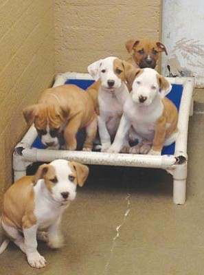 Courtesy photo<br>Yavapai Humane Society needs your help keeping our community's homeless pets warm this winter. You can donate a bed from www.yavapaihumane.org and the bed will be shipped directly to YHS. Also consider taking a pet home for the holidays by adopting a pet from the Yavapai Humane Society this Black Friday.