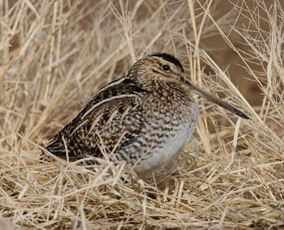 Courtesy photo<br>You really can go snipe hunting – no joke!