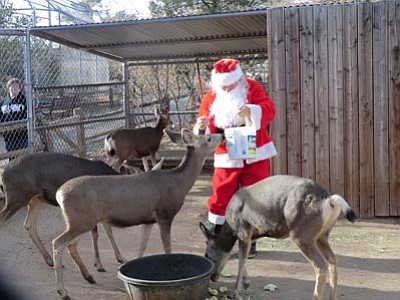 """Courtesy HPZS<br>Santa brings presents to the deer at the Heritage Park Zoological Sanctuary during the """"Santa with the Animals"""" event that takes place on Sunday, Dec. 8 this year. Below, a a raccoon checks out a present from Santa."""