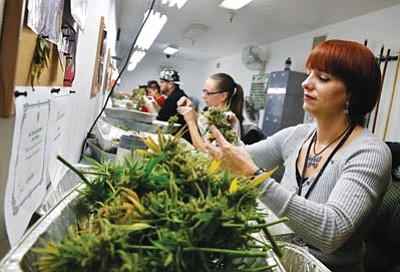 Brennan Linsley/The Associated Press<br>Lara Herzog trims away leaves from pot plants, harvesting the plant's buds to be sold at a marijuana dispensary.