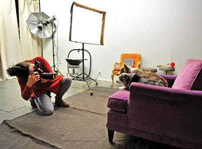 Matt Hinshaw/The Daily Courier<br> Lisa Faust, owner of Dogpatch Studio in downtown Prescott, photographs a pair of dogs inside her studio Tuesday morning.
