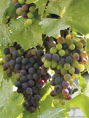 Thinkstockphotos.com<br>The Prescott area is an exceptional grape-growing region.