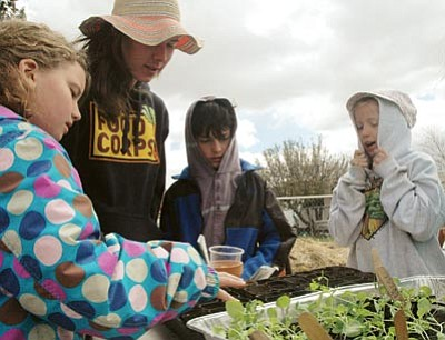 Patrick Whitehurst/The Daily Courier<br>Samantha Turner with the Prescott Farmers Market works with fourth-grade students Johanna Nash, Owen Briggs and Acacia Hahn at Mountain Oak School on Wednesday.
