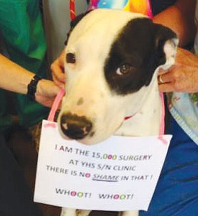 Loki was the YHS Spay/Neuter and Wellness Clinic's 15,000th patient June 4. (Courtesy Photo)<br /><br /><!-- 1upcrlf2 -->