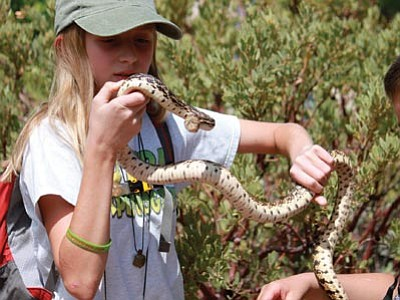 Allee Kidd demonstrates how to handle a gopher snake. (Courtesy photo)