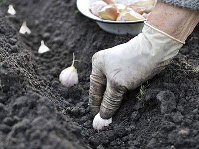 During the program, Dave Sawyer will also be on hand to speak about planting garlic. (Courtesy of Thinkstock)