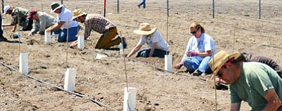 A group of harvesters works in Yavapai Community College's vineyard. (Photo courtesy of viticulture.yc.edu)