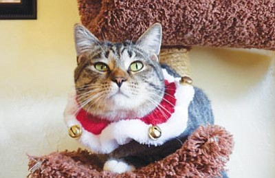 Spencer is hoping to find his forever home in time for the holidays. Call 445-5411 or stop by Miss Kitty's at 302 N. Alarcon St., 11 a.m. to 3p.m. Fridays and Saturdays to meet this sweet and handsome boy.